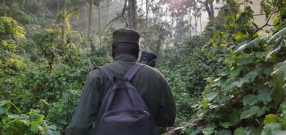 Gorilla hiking trail bwindi