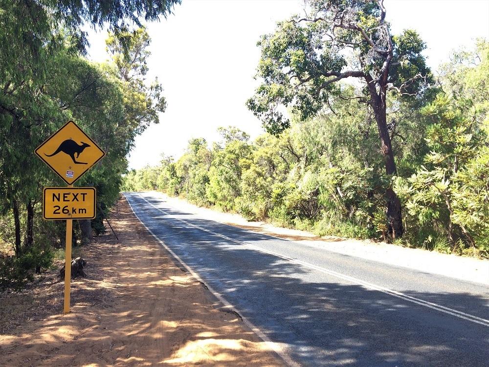 Margaret River Kangaroo
