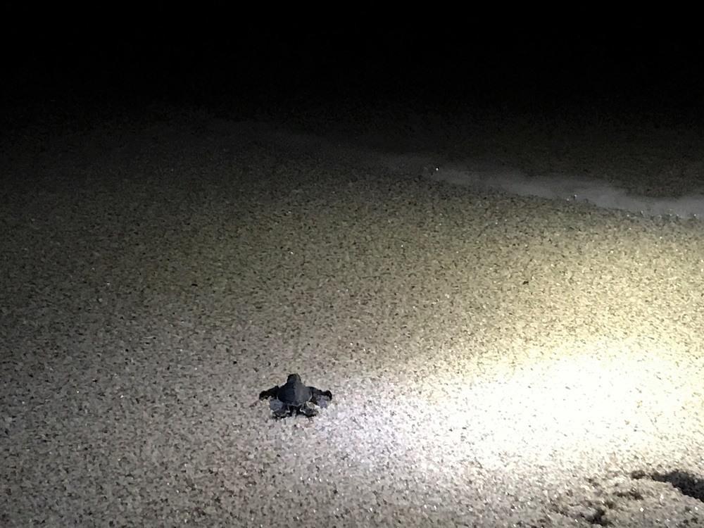 Oman Turtle beach