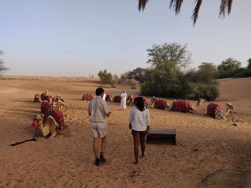 Camel tour Dubai UAE