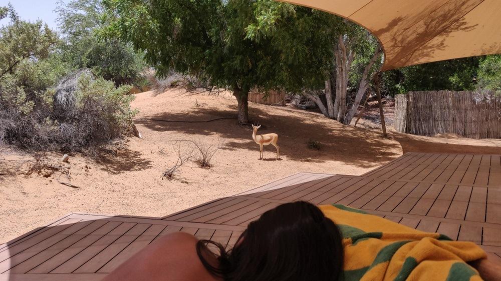 Wildlife visitor