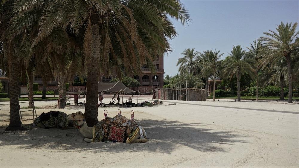 Emirates Palace camels