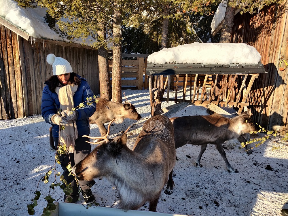 Reindeer encounter