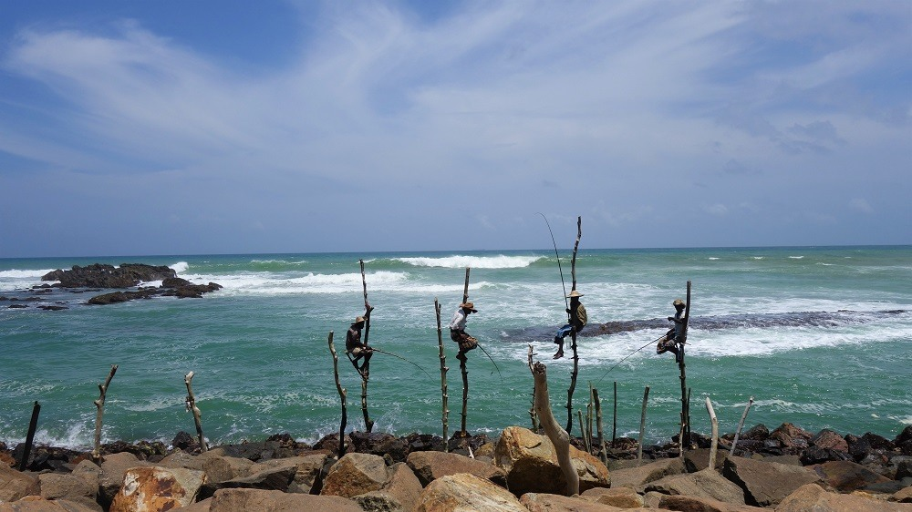 Stilt Fishing Sri Lanka