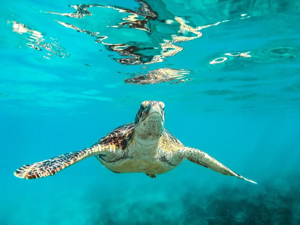Turtle Snoopy Island UAE
