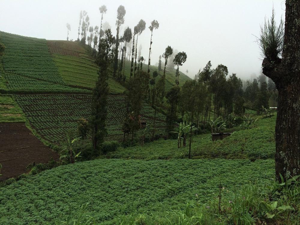 Surabaya Bromo plantations