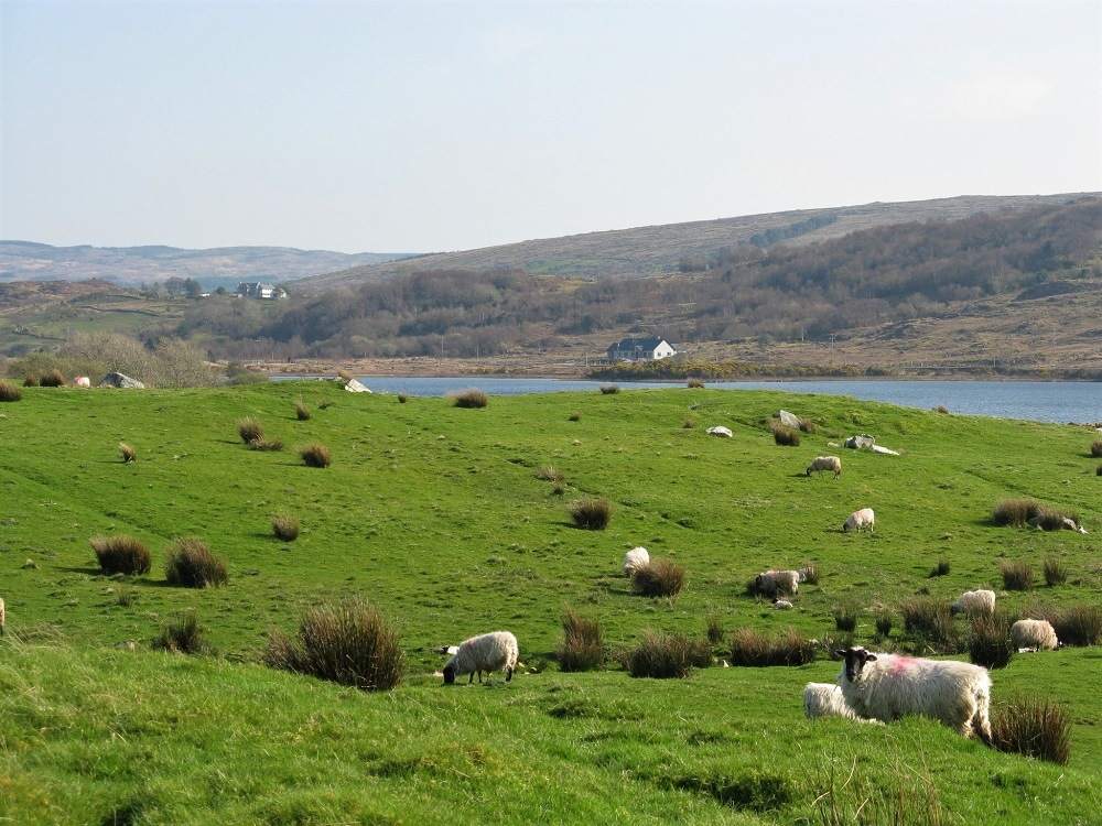 Country side Ireland