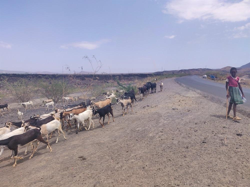 Ethiopia Goat herder