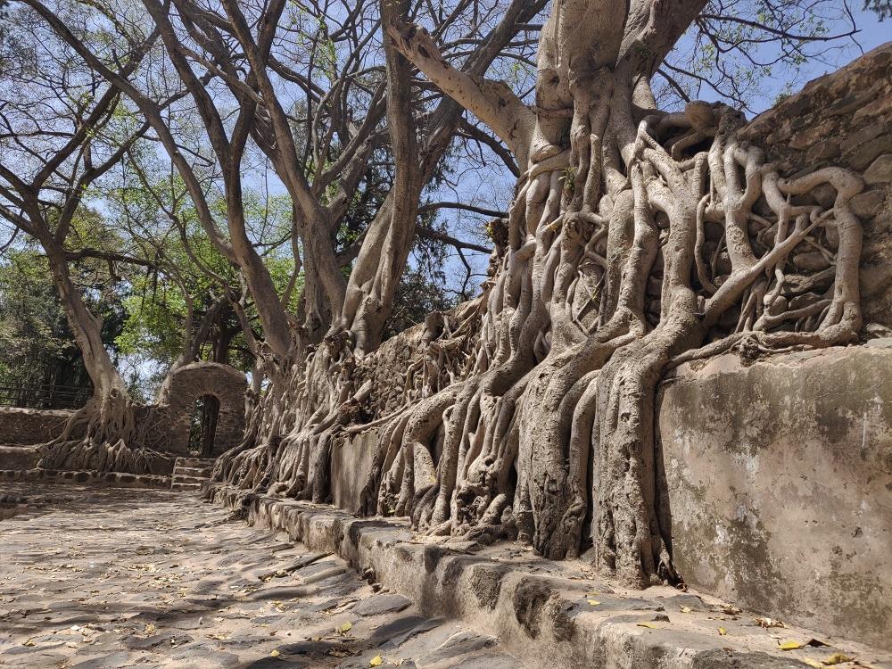 Gondar Fassil Gebbi