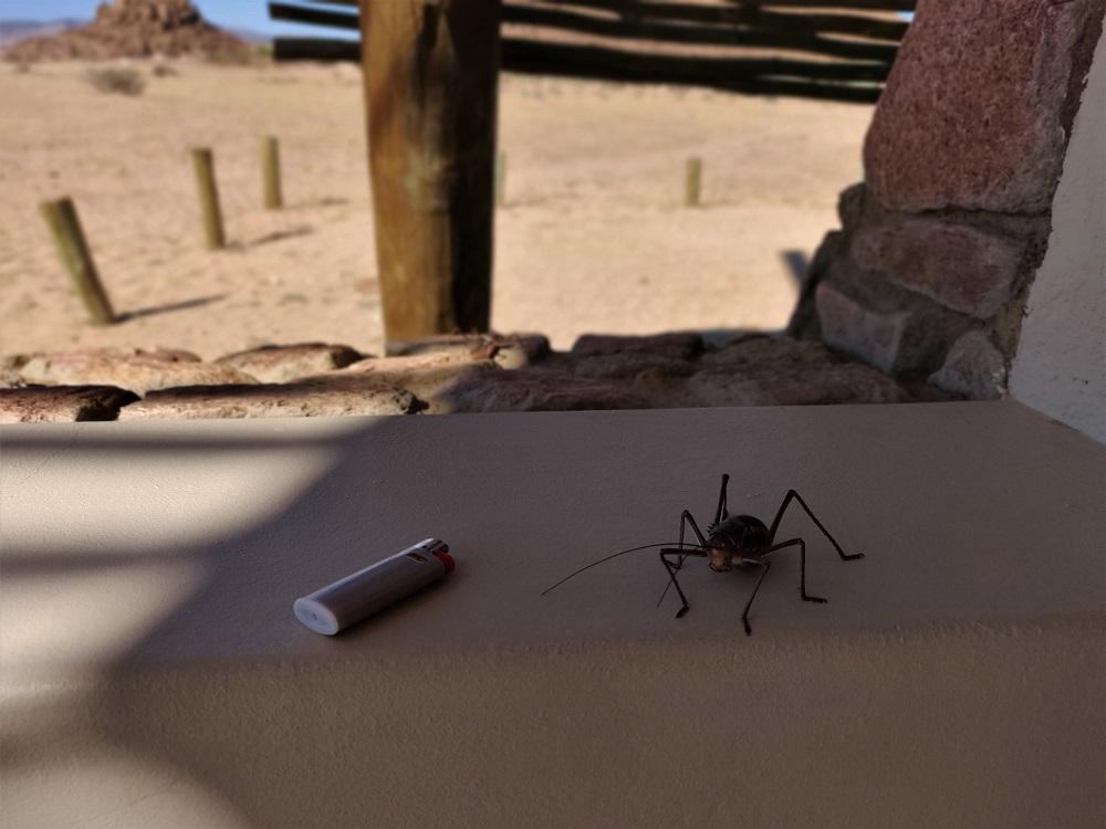 Namibia Cricket